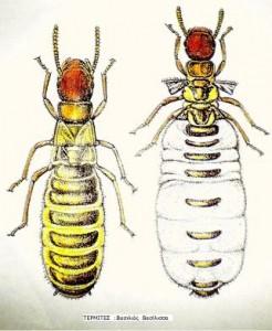 termites4